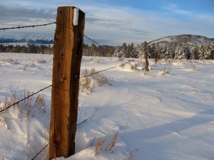 Random Fence Post